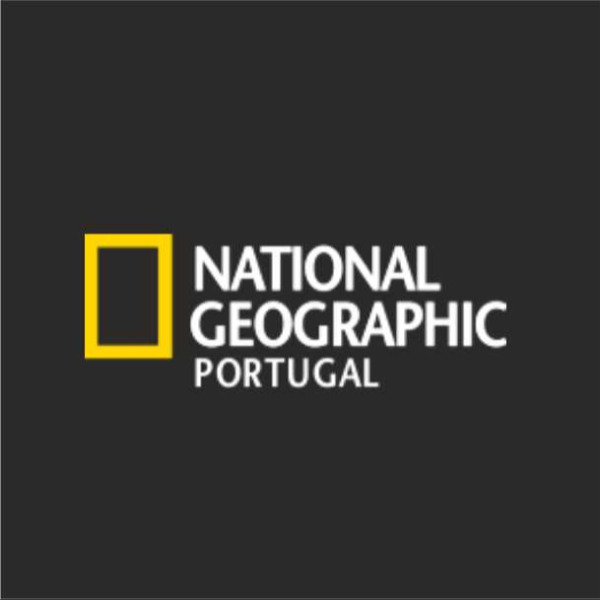 Abutre-preto Está a Recuperar a sua Presença em Território Português